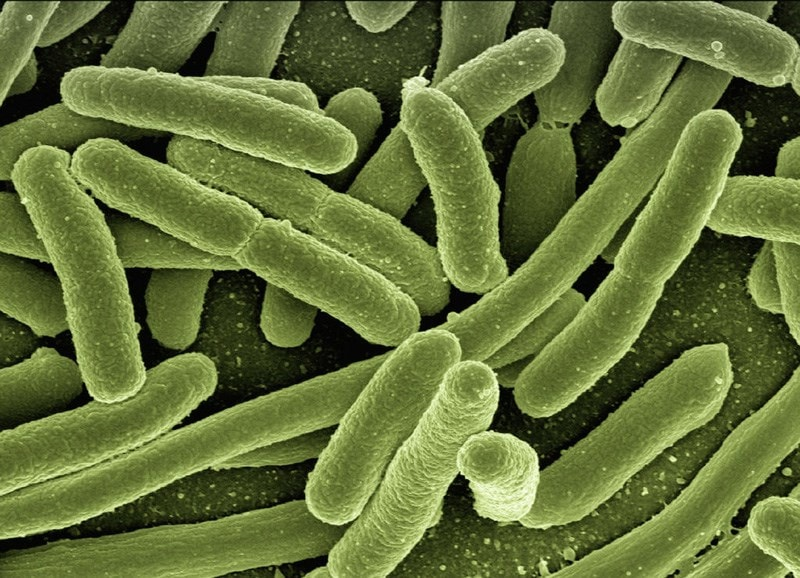 microscopic bacteria